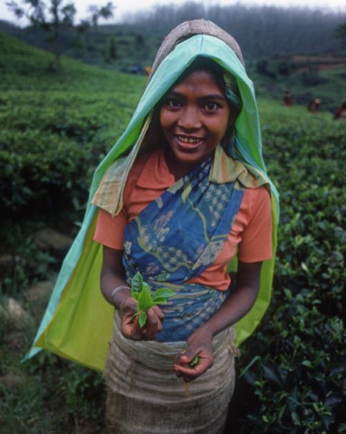 srilankatea