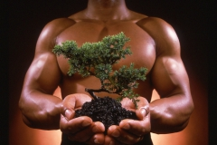 muscle-tree-sm030